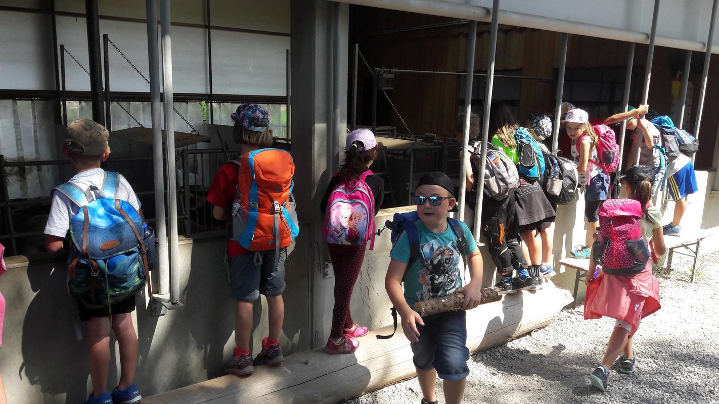 Wanderung Klassen 1-2a und 1-2b